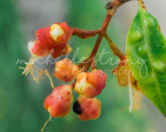 Botanical Garden Print, Red Berries Image, Macro Photography, Floral Print, Botany Photography, Digital Download, Berries, Outdoor Image