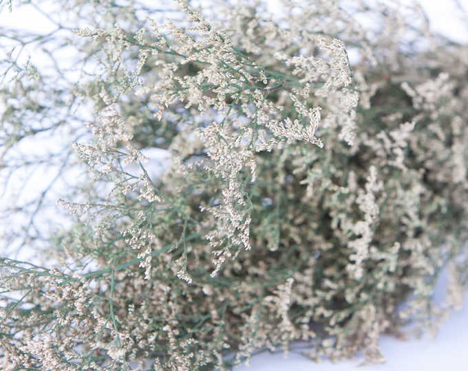 Preserved Dried Caspia  -  Preserved Misty - Preserved Caspia - Misty Green - FIller Flower - DIY Fowers