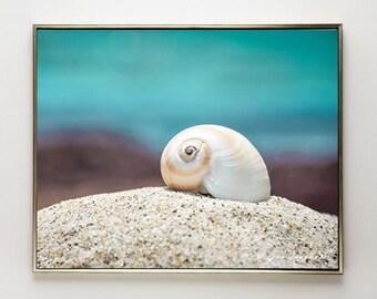 seashell wall art aqua wall art 20x30 white shell 8x10 photo bathroom prints 11x14 shell