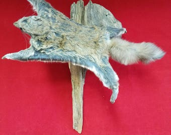 Taxidermy Flying Squirrel-grade b-hanging display--chipmunk-mouse-rat-ermine