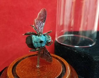 Taxidermy Preserved Blue Winged Carpenter Bee-entomology-insect-bug-wasp-hornet