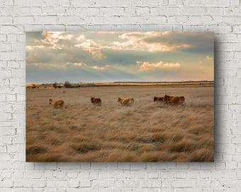 Cows Canvas, Cattle Canvas, Cow Wall Decor, Texas Cattle Art, Texas Cow Artwork, Western Canvas, Cows on Canvas, Cow Gifts, Business Decor