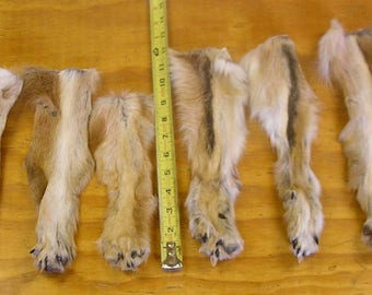 8 Coyote Legs