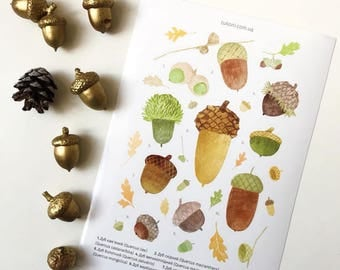 Acorn stickers Nature stickers Forest stickers Planner stickers Oak stickers set Agenda Fall stickers Acorn stationary Woodland stationary