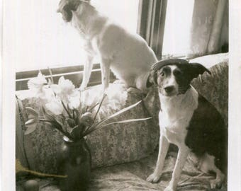 Vintage Polaroid Photo of Two Dogs In Window One Wears Hat, 1960's Original Found Photo, Vernacular Photography