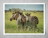 Group of Zebras - Animal Photography, Africa Safari Archival Giclee Print, Wildlife Photo - Multiple Sizes Available