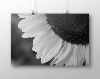 Black and White Wall Photo | Sunflower | Hippie Summer Print | Minimalist Flower Print | Boho Garden Décor | Hippie Garden Decor