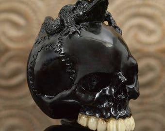 HUMAN SKULL Frog Black Bovine Horn NETSUKE Carving Memento Mori Paperweight 53 g