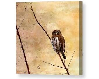 Owl Canvas, Owl Decor, Small Owls, Owl Wall Art, Pygmy Owl, Owl Wall Decor, Bird Wrapped Canvas, Bird Decor, Nature Canvas Art, Nature Decor