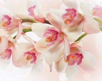 Laminated placemat pink Orchid