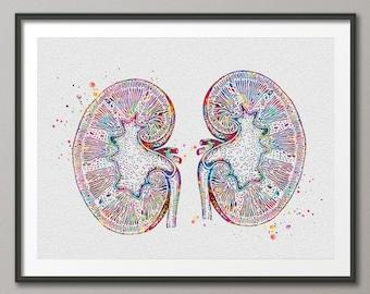 Kidneys Watercolor Print Human Organs Gastrointestinal Nephrology Clinic Decor Art Graduaiton Gift Medical Art Doctor Art Gift-1032