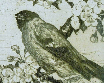 Bird Print / Antique Print of Bird on a Blossom branch with Home in the background / German Origin