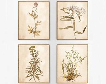 Vintage Foliage Set, Antique Flower Set, Leaf Prints, Set of 4 - Digital Prints