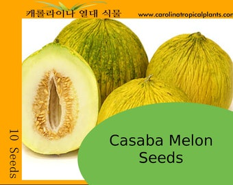 Casaba Melon Seeds – 10 Seed Count