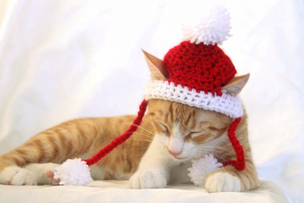 Santa Hat for Cats Cat Santa Hat Holiday Cat Hat Christmas