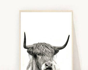 Highland Cow Print, Highland Cow download,  Printable Art,  Modern Wall Art, Instant Download, Wall Decor, Black And White, Animal Print