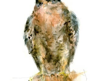 Peregrine watercolor painting - bird watercolor painting - 5x7 inch print - 0146
