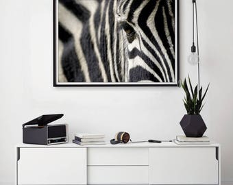 Large Wall Art Wild Life Zebra Canvas Print