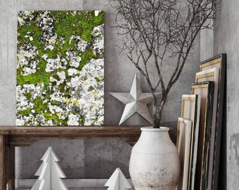 Lichen Print, Moss Print, Nature Print, Moss Photo, Botanical Art, Large Poster, Moss Photography,Large art, Large wall art, Printable art