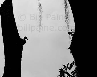 Whistling Duck study - Nature photography - Digital download - Black and White photography - Nature art - Whistling duck photography