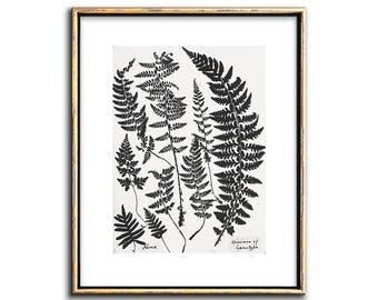 Botanical Art, Fern Art, Black and White, Botanical Print, Fern Print, Wall Art, Printable Art, Art Prints, Wall Decor, Wall Art, Art, Print