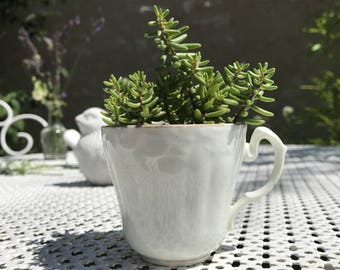 House. Upholstery. Hand made. Mini garden. Plant Green vintage decor. Kitchen decor. Table art. 1900's porcelain cup.