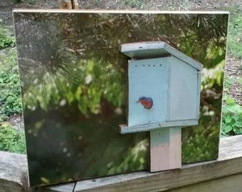 Folk art Bluebird