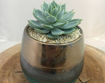Gold Metallic and Green with Succulent