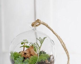 hanging terrarium, glass vase with Succulents, cactus, terrarium, hanging plant, glass hanging vase suspended