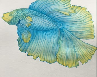 Beautiful blue and yellow Betta fish, watercolor painting, 9x12 wall ar