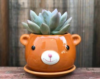 Cute ceramic BEAR succulent planter (PLANT INCLUDED) - Adorable animal planter