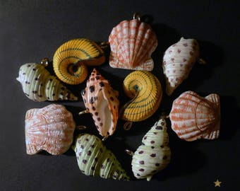 10 shell charms resin