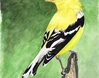 Goldfinch painting 8x10 watercolor