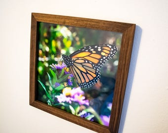 "Butterfly Photo - Framed Print - Flowers - Butterfly Photography - Monarch Photo - Handmade Walnut Frame - Feeding Butterfly - 10""x10"""
