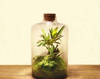 Jar shrub