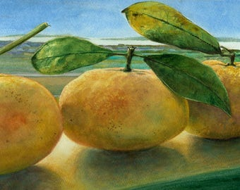 Clementine Caboose Original Watercolor of a row of Citrus on a window sill  Belinda DelPesco
