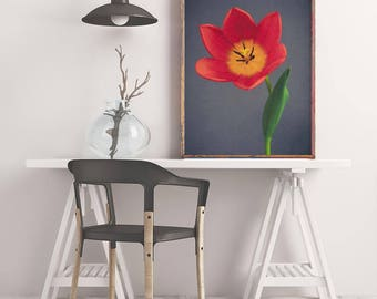 Red Tulip Art, Large Flower Photography, Tulip Print, Wall Art Print, Flower Art, Botanical Print, Floral Art Print, Nature Photography