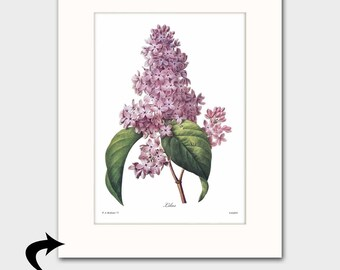 Lilac Art w/Mat (Purple Flower Wall Decor, 8th Anniversary Gift, Cottage Room Artwork) Matted Redoute Botanical Print