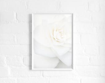 White Rose A3 Art Print, White Floral Poster, Large Flower Print, Botanical Art, Girls Room, Wall Decor, Modern Floral