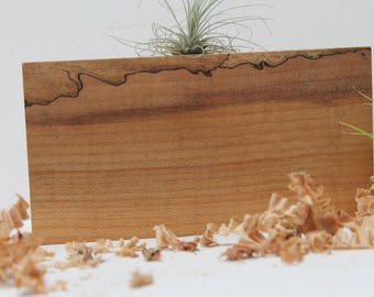 Spalted Air Plant Holder  M04