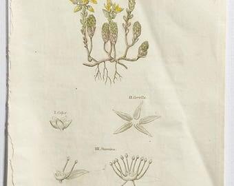 1812 Dr Thorntons Flora, Pepper Stonecrop, Sedum Acre, Botanical bookplate, Page 288, Copper engraving, Hand coloured botany print