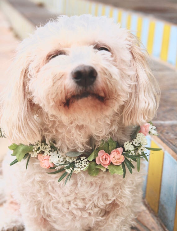 Dog Flower Collar. Dog Flower crown. Dog flower wreath. Dog wedding collar. Dog Collar. Dog costume.