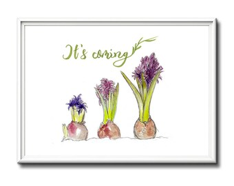 Spring decor wall art, limited edition spring hyacinth print. Mothers day gift idea.  Art print, spring flowers
