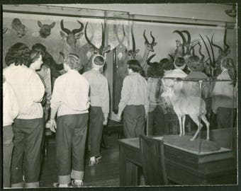 Vintage Snapshot Photo of Teenage Girls Looking At Taxidermy in Museum 1950's, Original Found Photo, Vernacular Photography