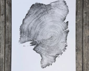 900 Year Old Juniper Tree, Tree Ring Art Print, Limited Edition, Gift for him, Fathers day, for guys, 1st year anniversary, Tree of Life
