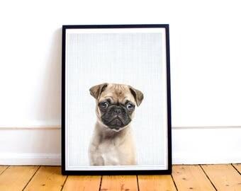Pug dog Downloadable Print Wall Art, Nursery Decor, Safari Animal, Printable Digital Download, Modern Minimalist Kids Room Poster