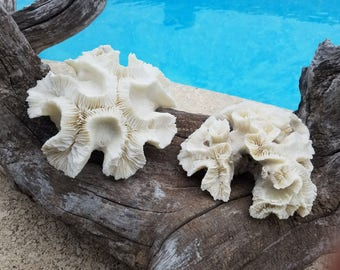 "Real Authentic Vintage Open Brain Coral 6-7"" Coastal Antique Rock Fossil Accent Beach Cottage Living Decor Mantle Coffee Table Shelf Display"