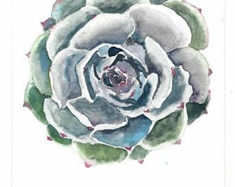 Succulent (note card) print