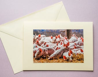 Piglets - all occasion greeting card