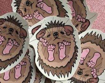 Single Cute Lil kawaii hedgehog high quality vinyl sticker 9x7cm